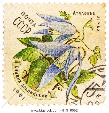 Stamp Printed In Ussr (cccp, Soviet Union) Shows Alpine Bluebell (atragene Alpina, Mertensia)