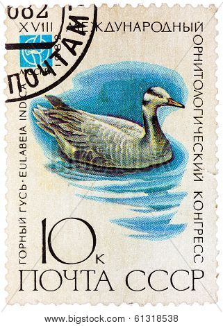 Stamp Printed In Ussr (russia) Shows A Bird Eulabeia Indica