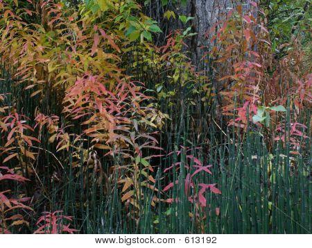 Riparian Plantlife In Autumn