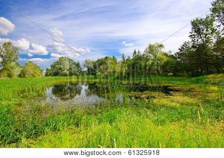 Forest bog under blue sky