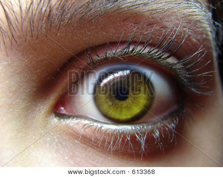 Green Eye Staring
