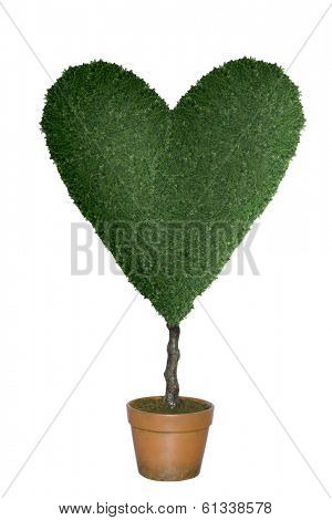 Topiary tree in shape of heart