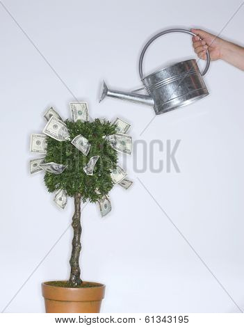Money growing on a tree with watering can