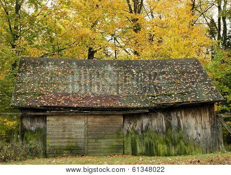 Wood Barn In Autumn