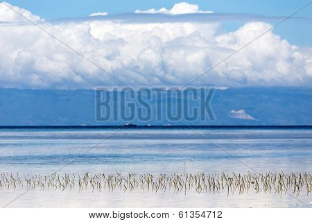 Submerged seagrass growing in the water on the seashore in Philippines with mountains topped by fluffy white clouds visible over the bay