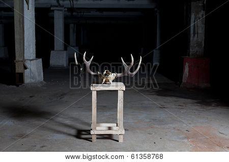 deer skull on stand in dark