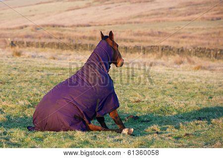 Horse sat down