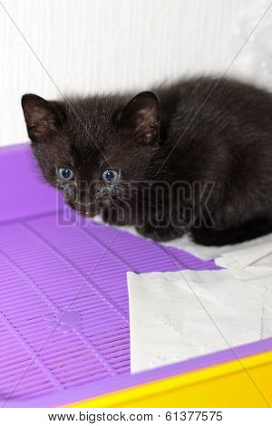 Black Kitten In Cat's Toilet
