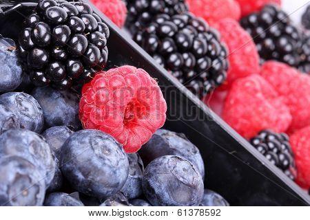 Bog Bilberries, Raspberry And Blackberry