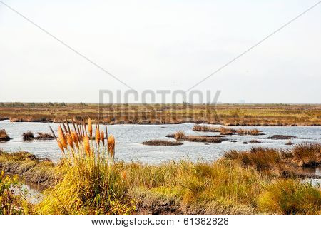 Marsh With Water And Grass Of Rio Averio, Portugal