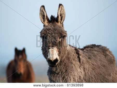 gray fluffy donkey