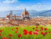 picture of poppy flower  - Florence Duomo and Giotto - JPG