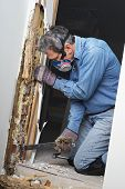picture of swarm  - Man prying sheetrock and wood damaged by termite infestation in house - JPG