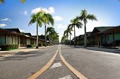stock photo of tree lined street  - Yellow dividing lines on road on tropic street - JPG