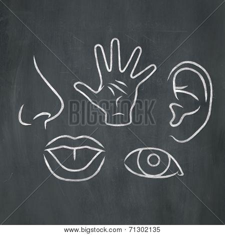 Chalk 5 Senses