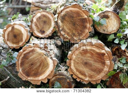 Chopped wooden logs