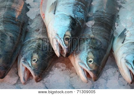 Market Fresh Sockeye Salmon