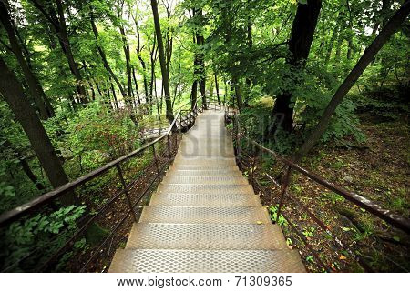 Stairway in Park with many trees