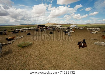 Goats on the steppes