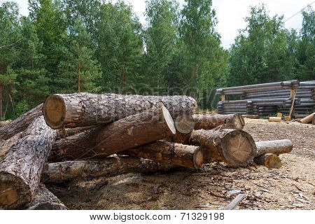 Not Planed Pine Timber In The Open Air
