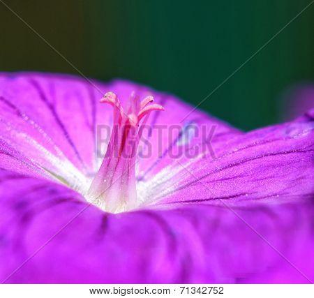 Pistils And Flower