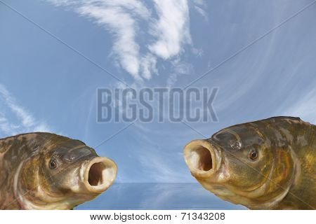 Choir two fish