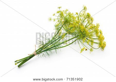 Dill Isolated On White