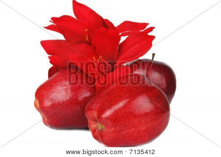 Apples And Flower.
