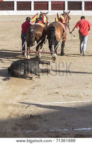 Drag Mules Are Bull Died In The Bullfight To The Slaughterhouse Of The Bullring Of Ubeda, Jaen Provi