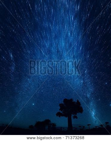 Starry sky and baobab trees. Motion blurred sky, focus on the tree