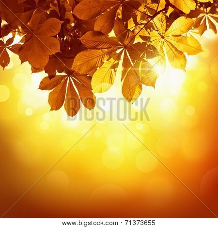 Natural background with autumn leaves in the sun rays
