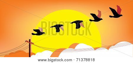Silhouette flying birds at sunset