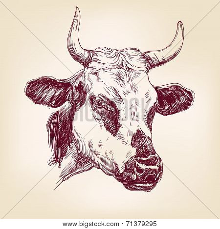 cow hand drawn vector llustration realistic sketch
