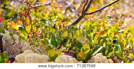 northern vegetation