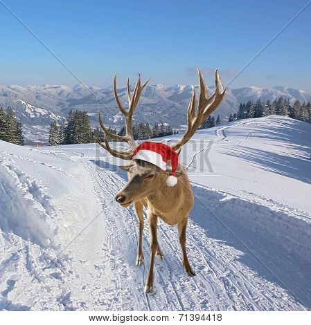 Reindeer With Santa Claus Hat, On Snowy Trail In The Mountains