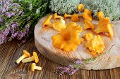 pic of chanterelle mushroom  - Chanterelle mushrooms on a cutting board on a background of forest moss and heather flowers - JPG