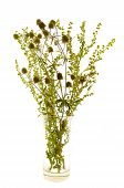 picture of sagebrush  - bunch grasses and sagebrush thistle isolate on white - JPG