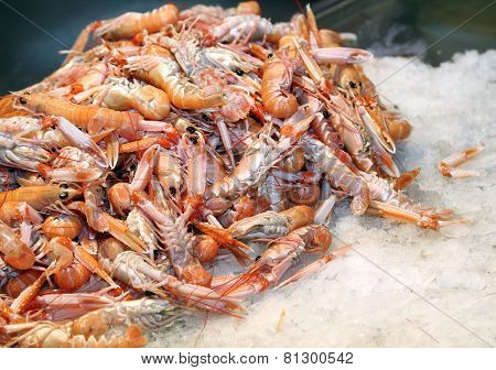 Fresh Prawns And Shrimps In The Ice For Sale In Fish Market