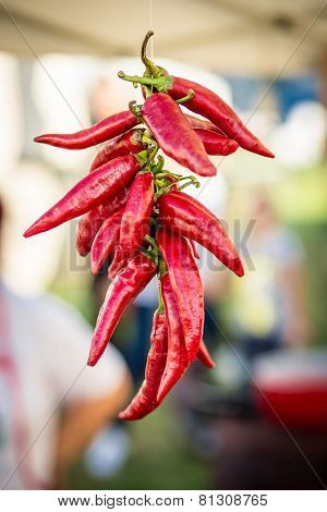 Hanging paprika peppers