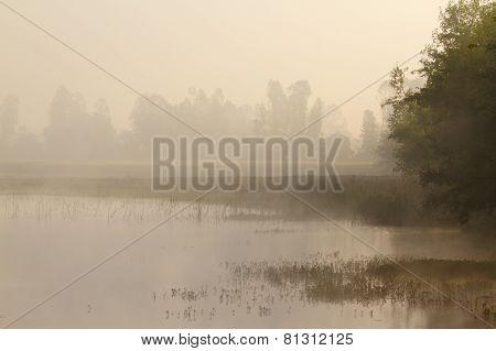 Misty Morning on a lake In Terai, Bardia, Nepal