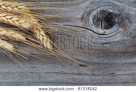 Dry Golden Wheat Stalks On Rustic Wood