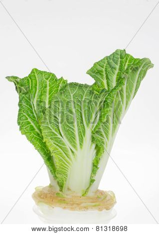 Chinese Cabbage Grown In Glass