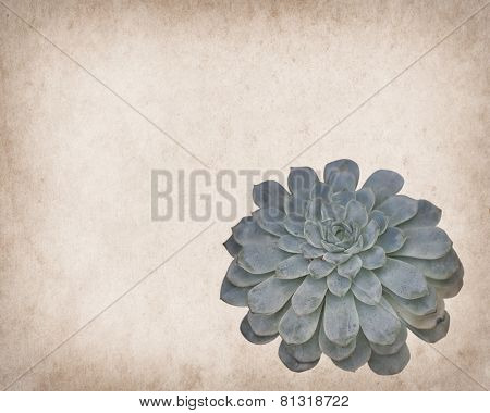 view of a cactus on on paper background
