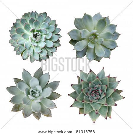 Macro of succulent plant in the desert collection