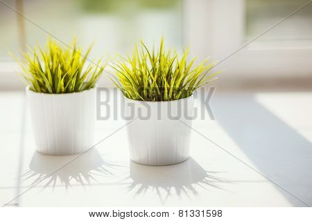 Grass In Pots On The Windowsill