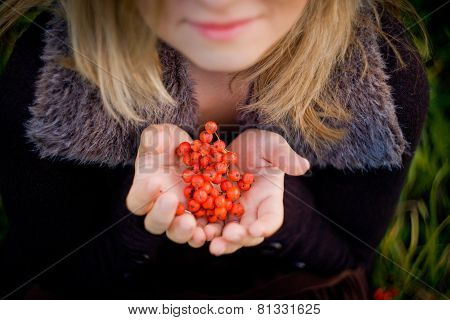 Red rowan berries in the hands