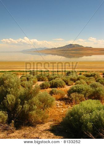 Sagebrush Along the Shore