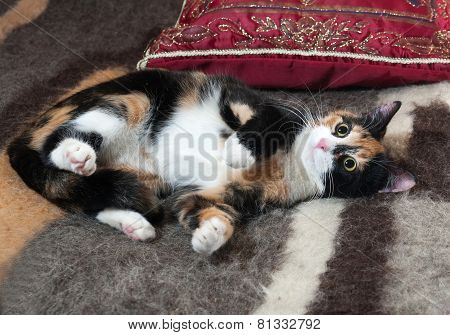Tricolor Kitten Lying On Blanket