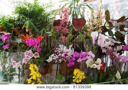 Street show-window of flower shop in Barselona