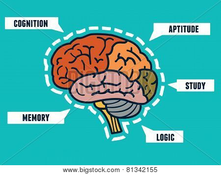 Capabilities Of The Human Brain. Mindmap And Infocharts